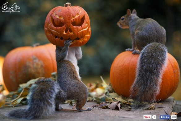 squirrel-o-lantern